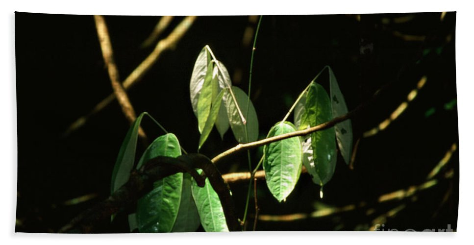 Leaves Bath Towel featuring the photograph Sunlit Leaves by Kathy McClure