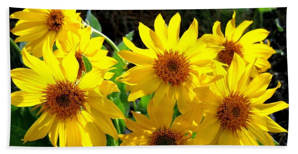 Wildflowers Hand Towel featuring the photograph Sunlit Wild Sunflowers by Will Borden