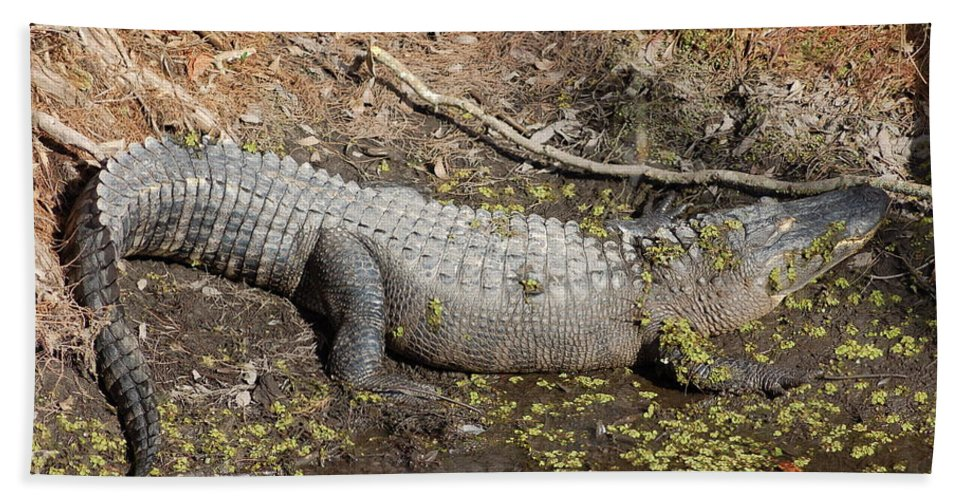 Crocodile Hand Towel featuring the photograph Sunning by Lucy Bounds