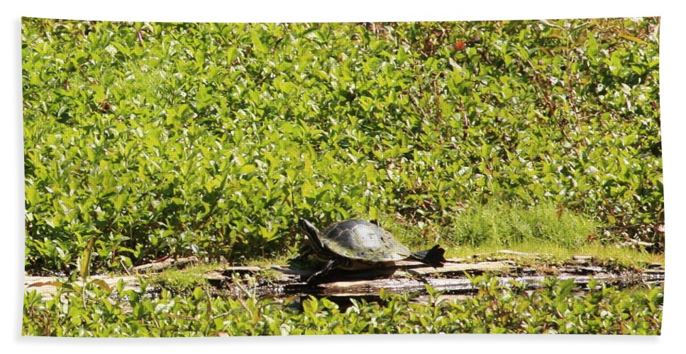 Turtle Bath Sheet featuring the photograph Sunning Turtle In Swamp by Carol Groenen