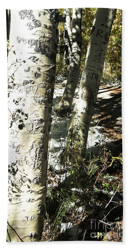California Hand Towel featuring the photograph Sunny Aspen Shadows by Norman Andrus