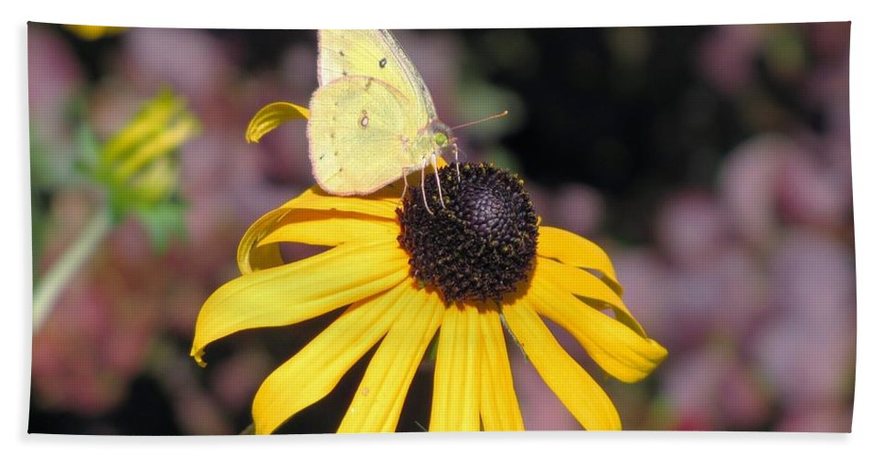 Yellow Butterfly On Yellow Flower Hand Towel featuring the photograph Sunny by Marilyn Smith