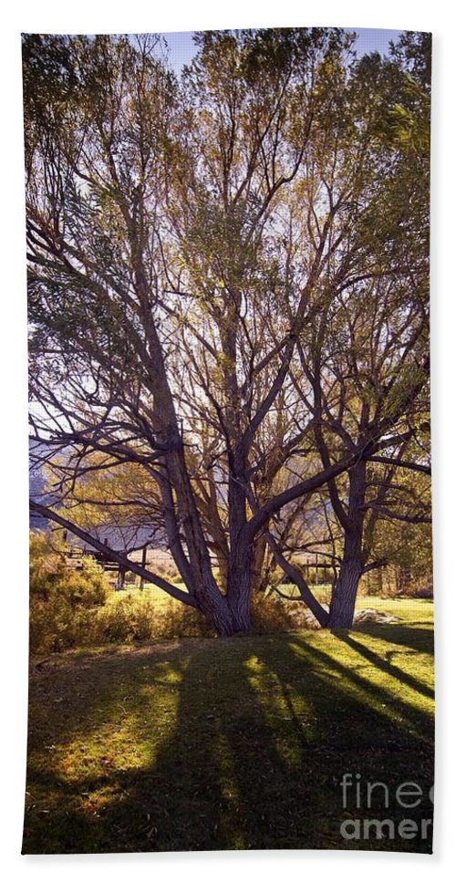 Western Scenes Hand Towel featuring the photograph Sunny Mono Tree by Norman Andrus