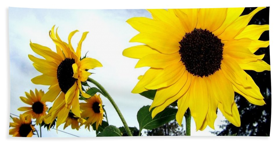 Sunflowers Hand Towel featuring the photograph Sunny Slopes by Will Borden