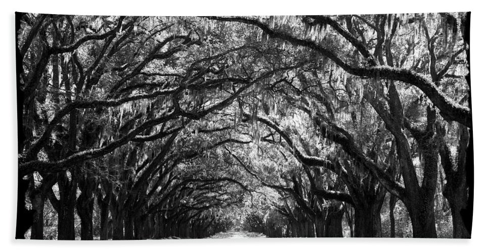 Live Oaks Bath Sheet featuring the photograph Sunny Southern Day - Black And White With Black Border by Carol Groenen