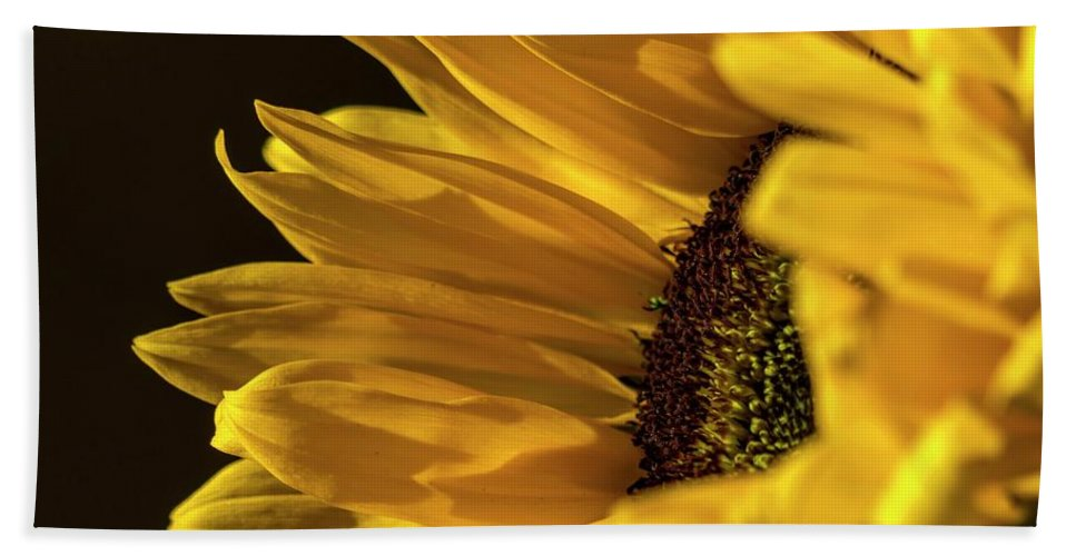 Sunflower Hand Towel featuring the photograph Sunny Too By Mike-hope by Michael Hope