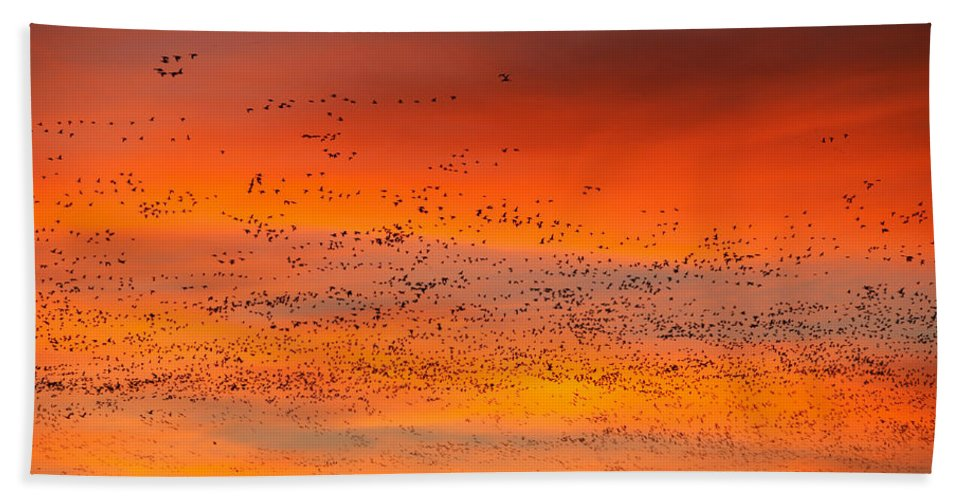 Migration Hand Towel featuring the photograph Sunrise Migration by Randall Ingalls