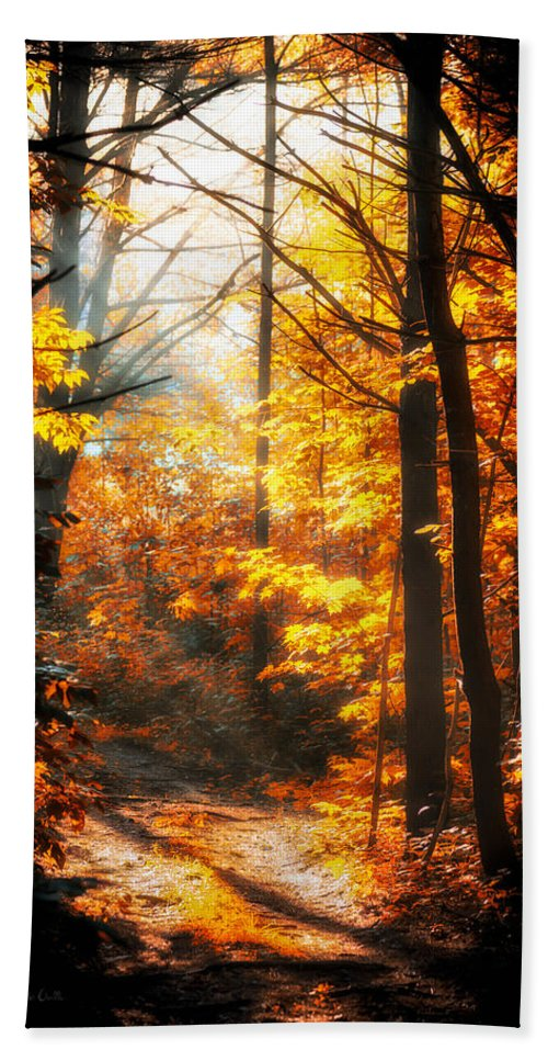 Woods Bath Sheet featuring the photograph Sunrise Mist Through The Trees by Bob Orsillo