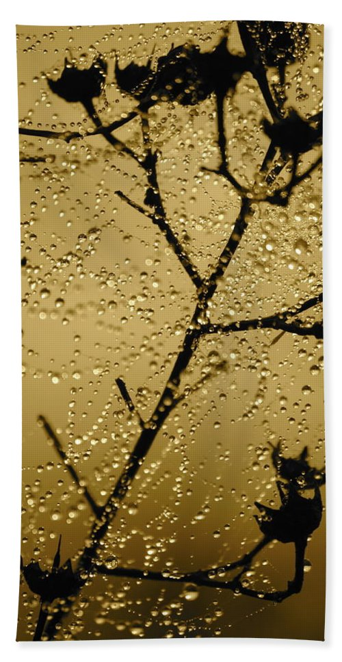 Dewdrops On Spider Web Hand Towel featuring the photograph Sunrise Sparkle by Carol Groenen