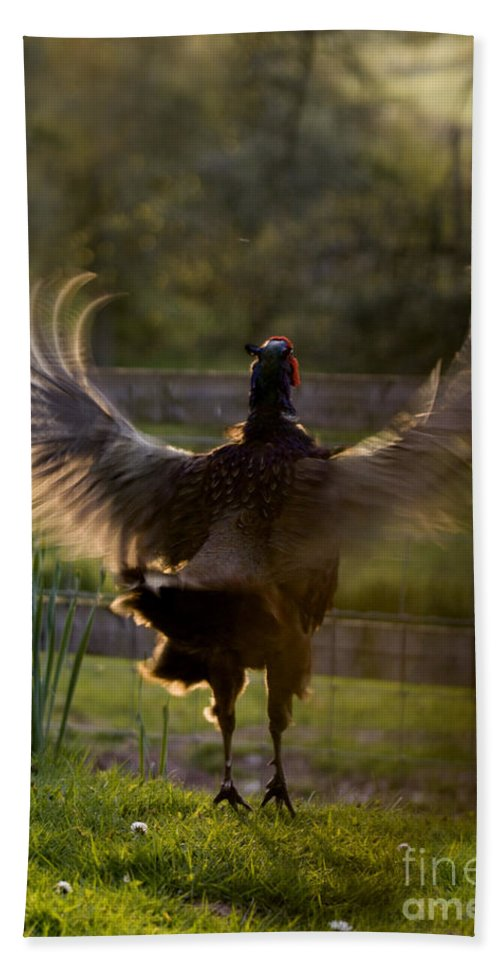 Pheasant Hand Towel featuring the photograph Sunset In His Wings by Angel Ciesniarska