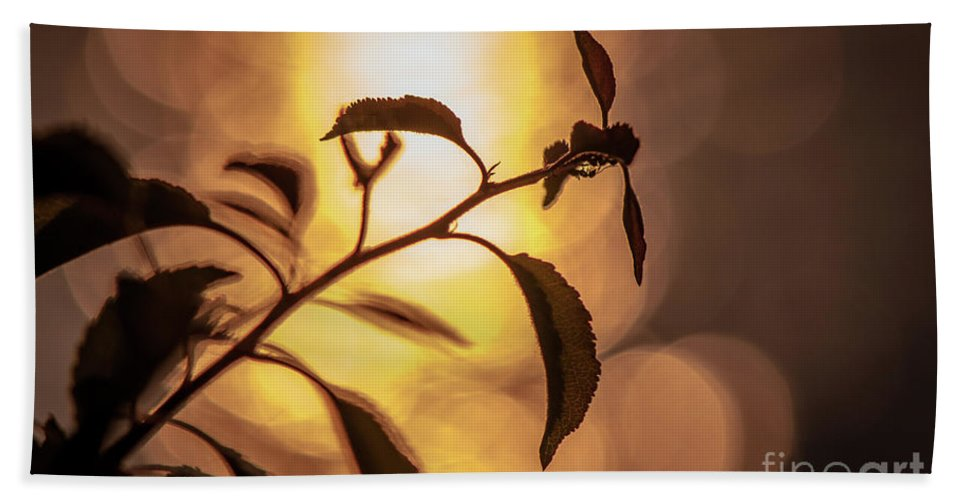 Sunset Bath Sheet featuring the photograph Sunset Of An Ant by Lyudmila Prokopenko