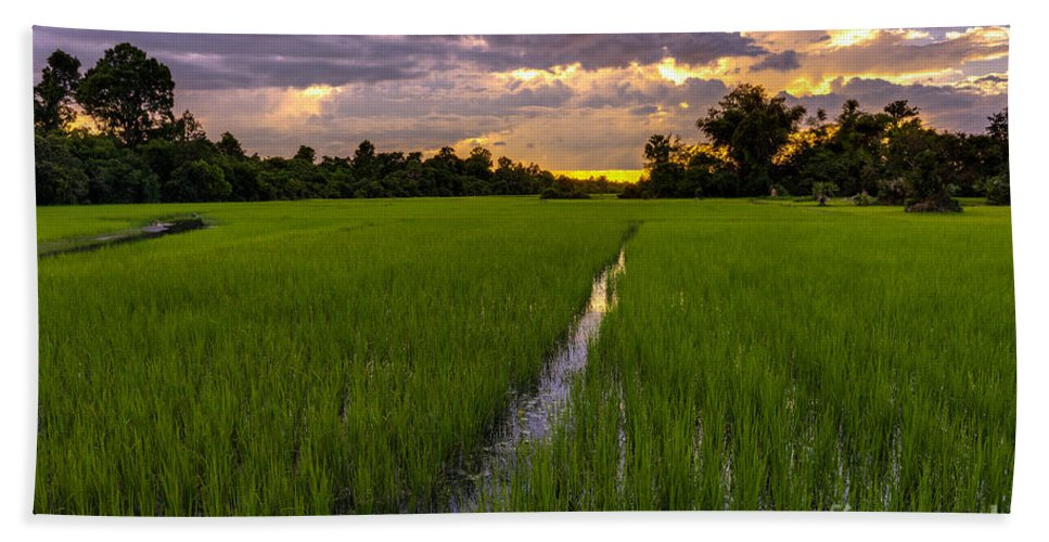 Sunrise Bath Sheet featuring the photograph Sunset Rice Fields In Cambodia by Mike Reid