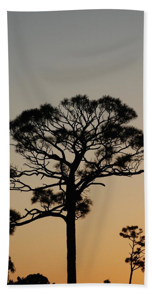 Tree Hand Towel featuring the photograph Sunsetting Trees by Rob Hans