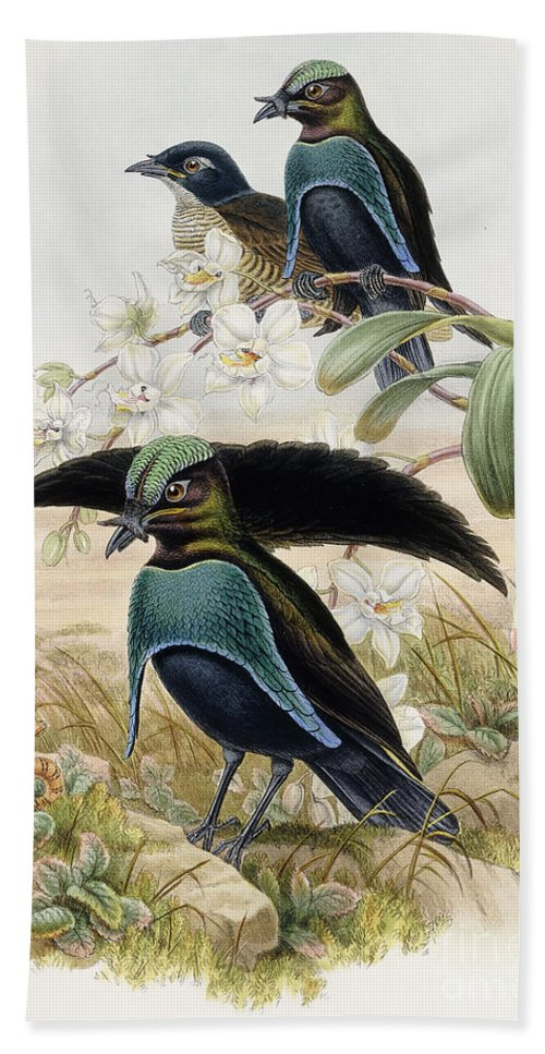 Gould Hand Towel featuring the painting Superb Bird Of Paradise by John Gould