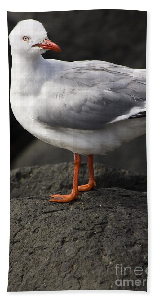 Animal Hand Towel featuring the photograph Suprised Australian Seagull by Jorgo Photography - Wall Art Gallery