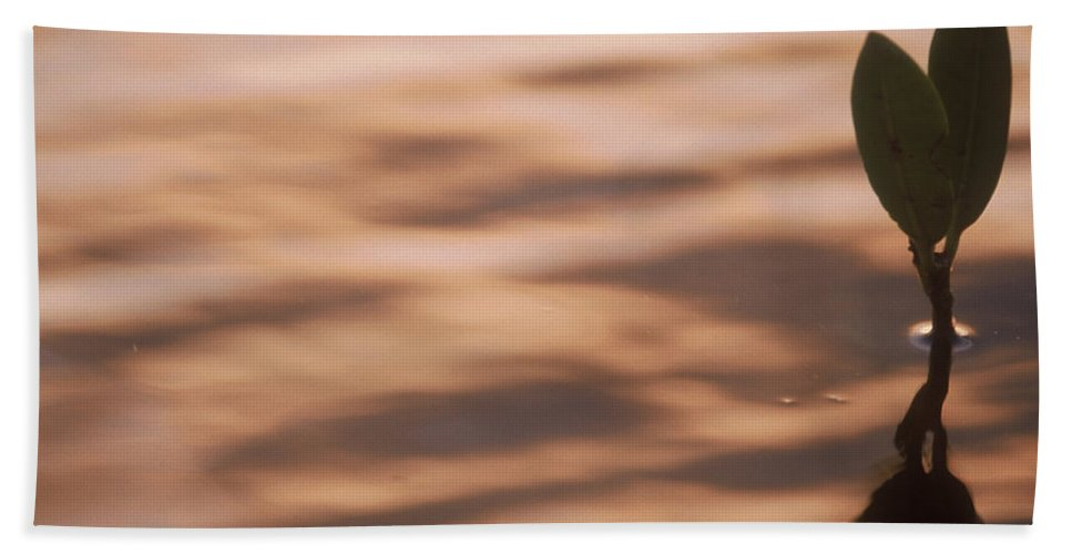 Nature Hand Towel featuring the photograph Surfacing Mangrove by Kimberly Mohlenhoff
