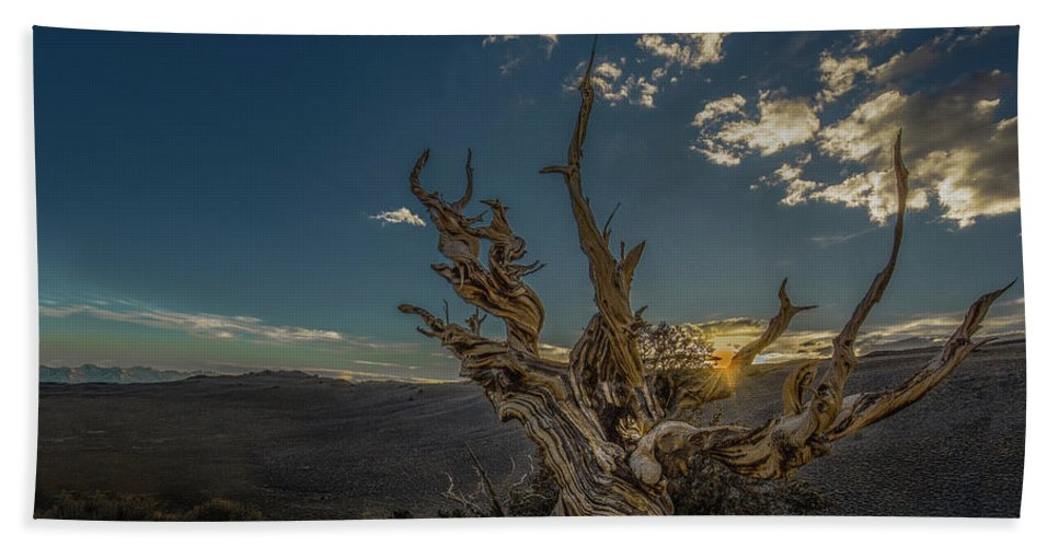 California Hand Towel featuring the photograph Survivor by Tim Bryan