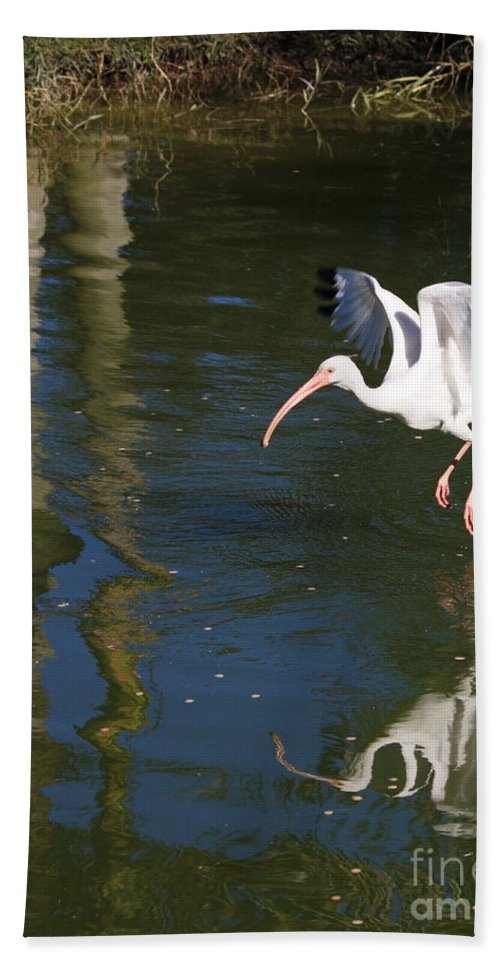 Flight Hand Towel featuring the photograph Suspended In Flight by Carol Groenen
