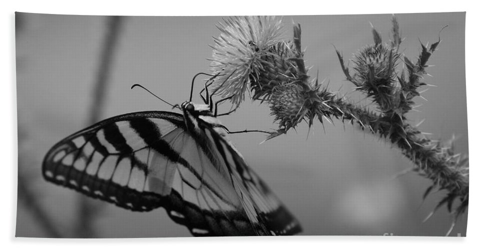 Swallowtail Bath Sheet featuring the photograph Swallowtail Black And White by Todd Hostetter