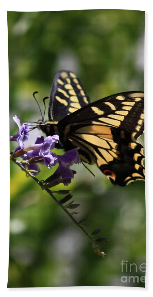 Swallowtail Butterfly Bath Towel featuring the photograph Swallowtail Butterfly 1 by Carol Groenen