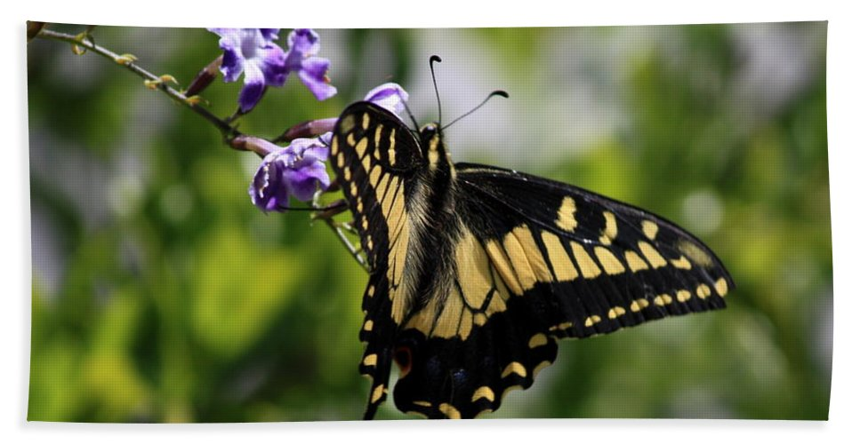 Swallowtail Butterfly Hand Towel featuring the photograph Swallowtail Butterfly 2 by Carol Groenen