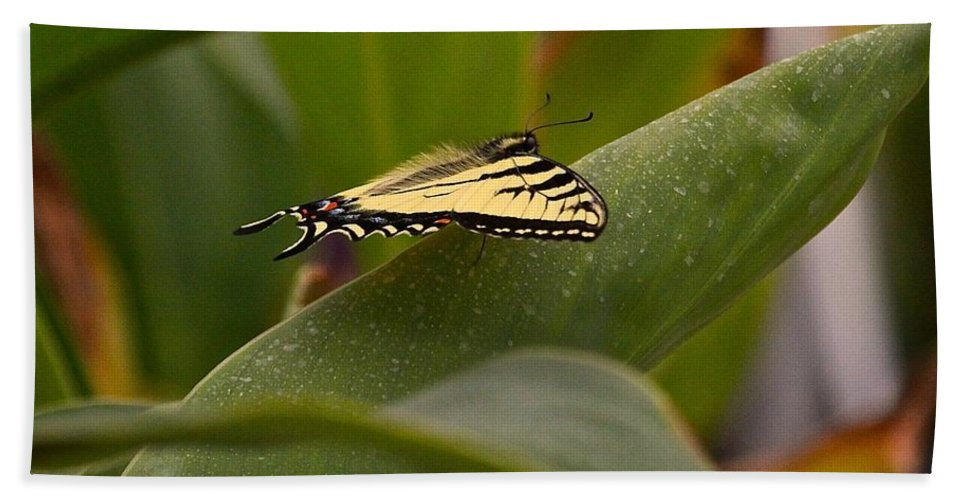 Butterfly Hand Towel featuring the photograph Swallowtail Butterfly by Leanne Matson