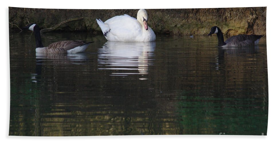 St James Lake Bath Sheet featuring the photograph Swan And Geese by Jeremy Hayden