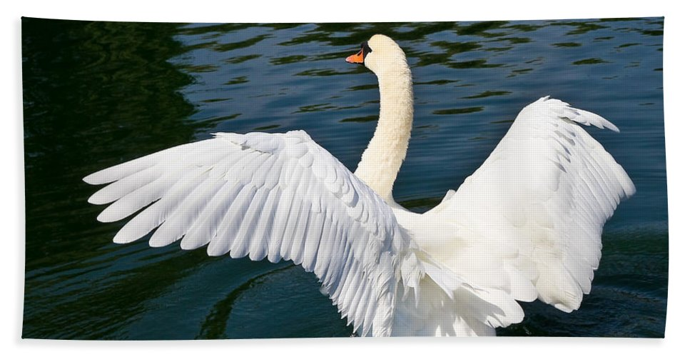 Swan Bath Sheet featuring the photograph Swan Moment by John Waclo