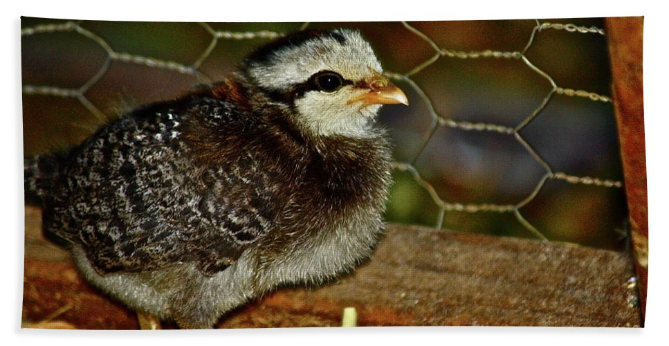 Fowl Hand Towel featuring the photograph Sweet Baby by Diana Hatcher