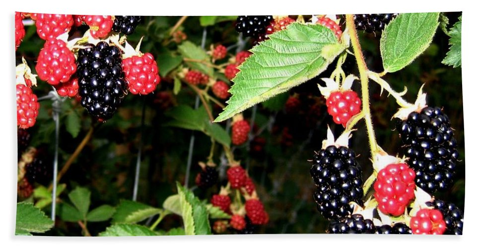 Blackberries Bath Sheet featuring the photograph Sweet Blackberries by Will Borden
