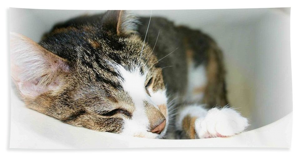 Cat Bath Towel featuring the photograph Sweet Dreams by Nelson Strong