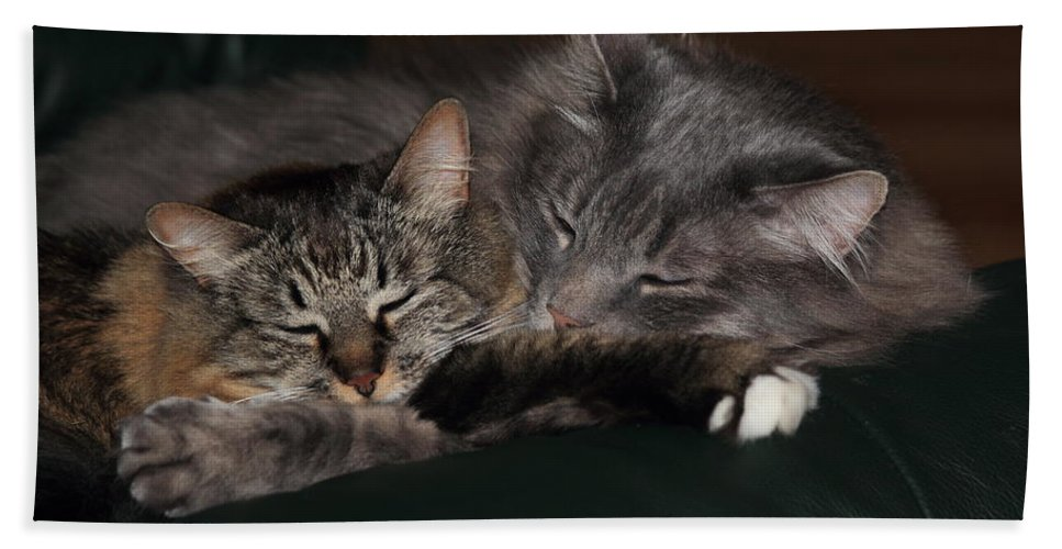 Cats Hand Towel featuring the photograph Sweet Dreams by Shane Bechler