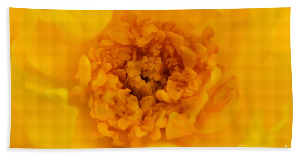 Yellow Bath Sheet featuring the photograph Sweet Heart Of Yellow Rose by Olga Hamilton