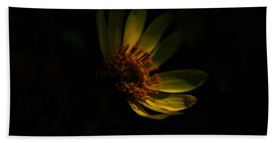 Flower Hand Towel featuring the photograph Sweet Mystery by Donna Blackhall