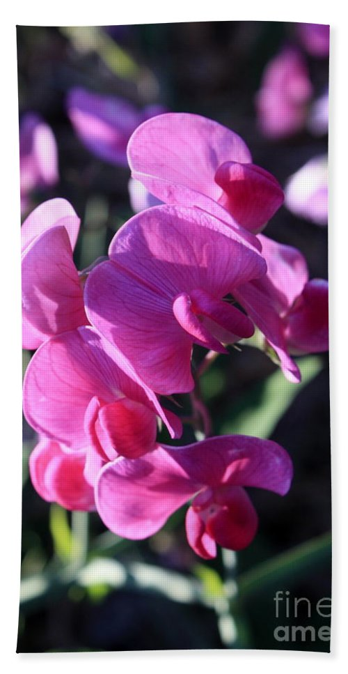 Sweet Pea Hand Towel featuring the photograph Sweet Pea by Carol Groenen