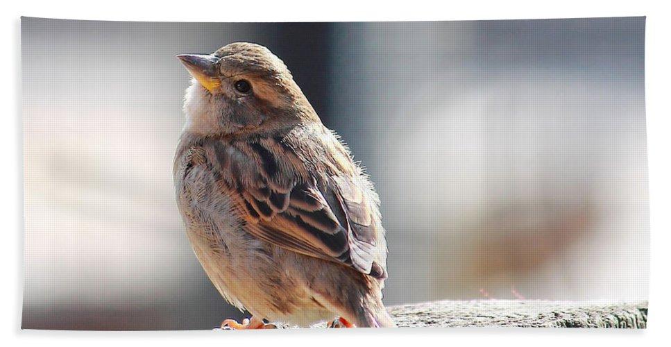 Sparrow Bath Sheet featuring the photograph Sweet Sparrow by Angela Murdock