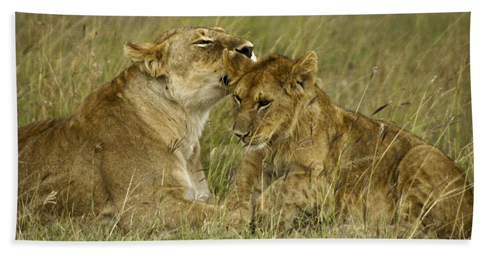 Africa Hand Towel featuring the photograph Sweet Thing by Michele Burgess