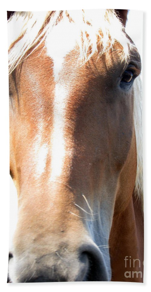 Horse Bath Towel featuring the photograph Sweetie by Amanda Barcon