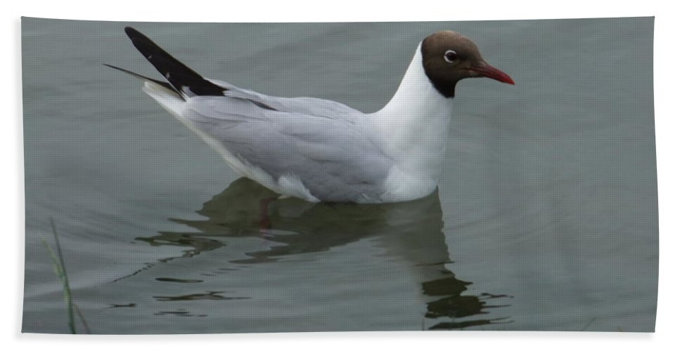 Bird Bath Sheet featuring the photograph Swimming Gull by Andrew Ford