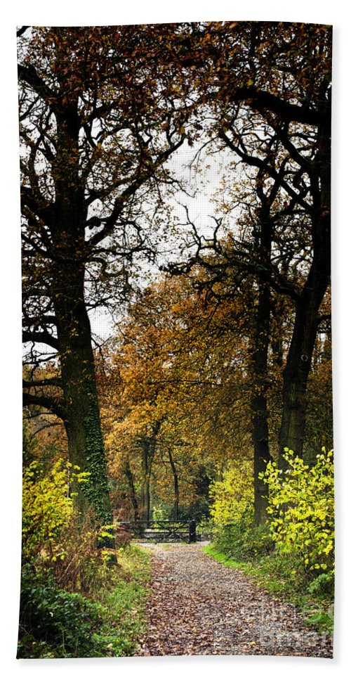 Woods Bath Sheet featuring the photograph Swithland Woods, Leicestershire by Linsey Williams