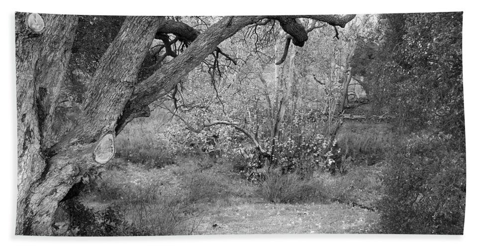 Landscape Bath Sheet featuring the photograph Sycamore Grove Black And White by Karen W Meyer