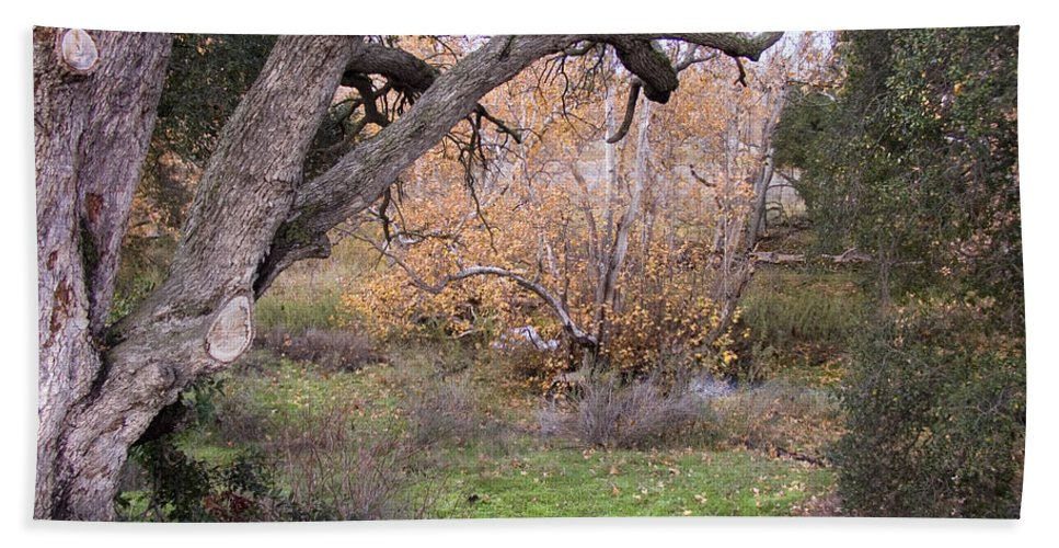 Landscape Bath Sheet featuring the photograph Sycamore Grove Fall by Karen W Meyer