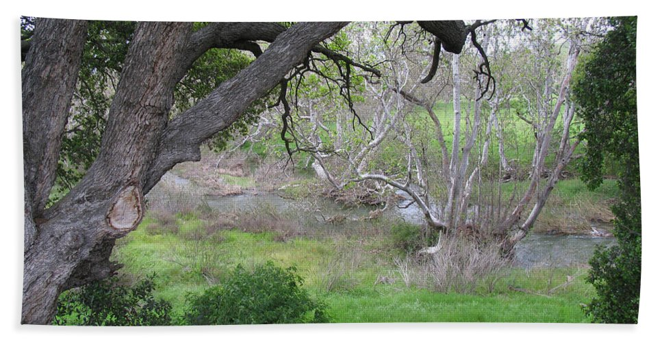 Landscape Bath Towel featuring the photograph Sycamore Grove by Karen W Meyer