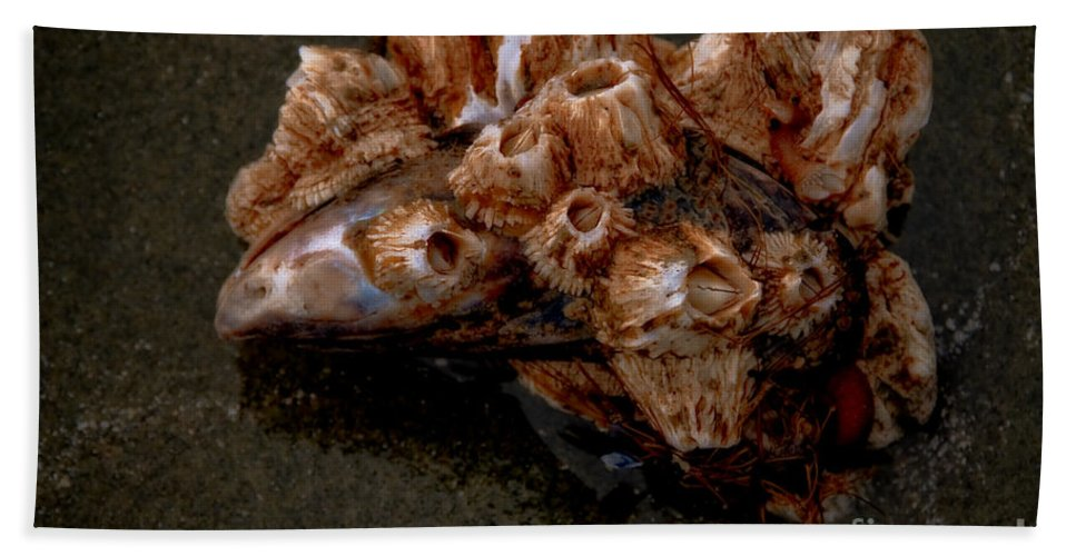 Barnacles Bath Sheet featuring the photograph Symbiosis by Venetta Archer