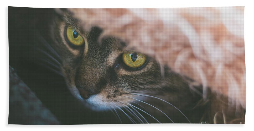 Tabby Hand Towel featuring the photograph Tabby Cat Looking From Beneath A Blanket by Alexandru Handrache