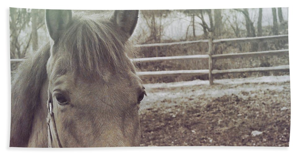 Horse Bath Sheet featuring the photograph Take A Chance by JAMART Photography