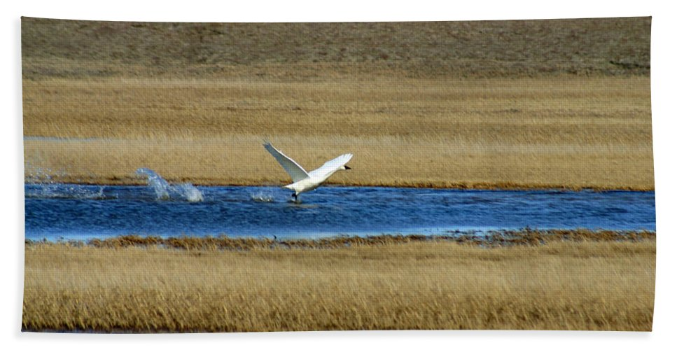 Swan Bath Towel featuring the photograph Take Off by Anthony Jones