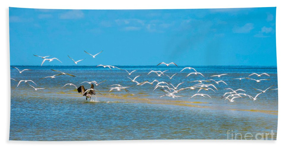 Shorebirds Hand Towel featuring the photograph Taking Flight by Marilee Noland