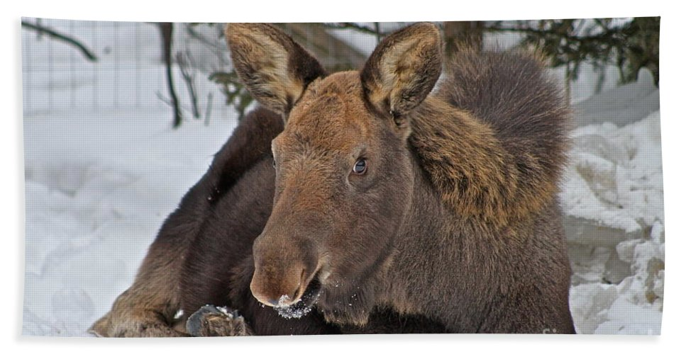 Moose Bath Towel featuring the photograph Taking It Easy by Rick Monyahan