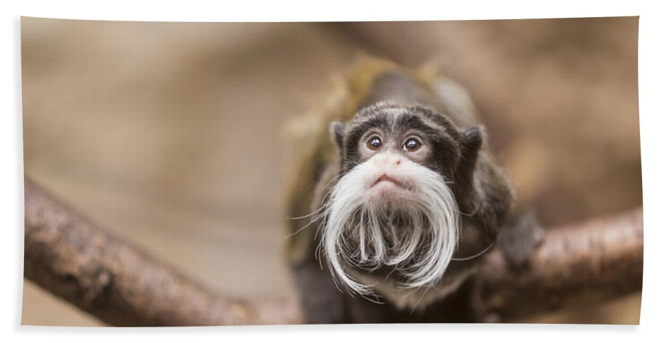 Monkey Hand Towel featuring the photograph Tamarin Monkey 1 by John Brueske